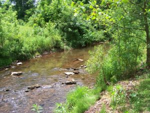 Fishing Creek near Colonial Brownstone
