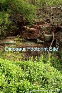 Dinosaur Footprint Site on Brownstone Property For Sale
